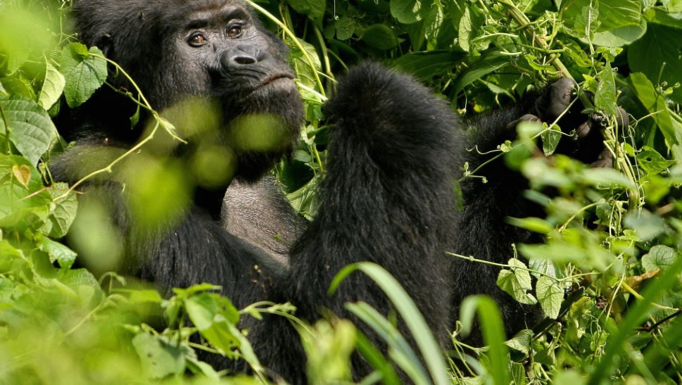 Rwanda Gorilla and Mount Kilimanjaro Adventure