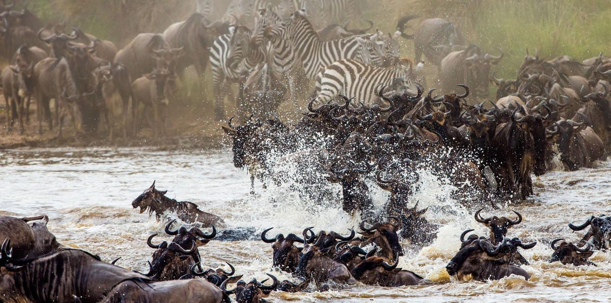 Kenya Great Wildebeest Migration Safari