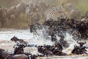 Kenya Great Wildebeest Migration Safari