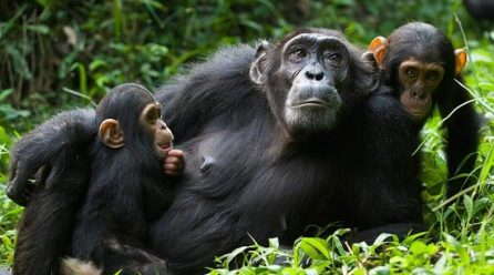 Bespoke Chimpanzee Trekking in Kibale Forest National Park