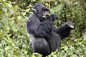 Luxury Green Journeys in Rwanda