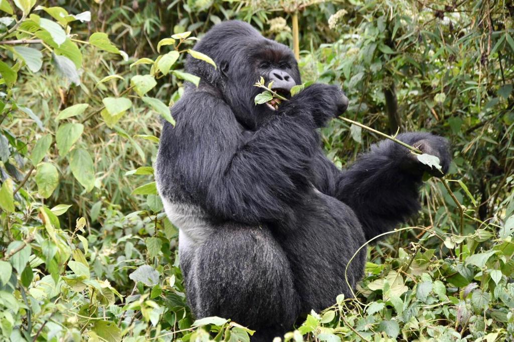 Luxury Green Journeys in Rwanda